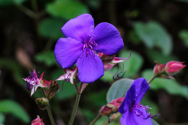 Unidentified Flower - Mendocino Coast Botanical Gardens - Fort Bragg, CA