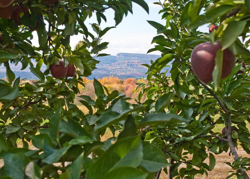 Peeking through apples to Sky Top and the Shawangunk Ridge