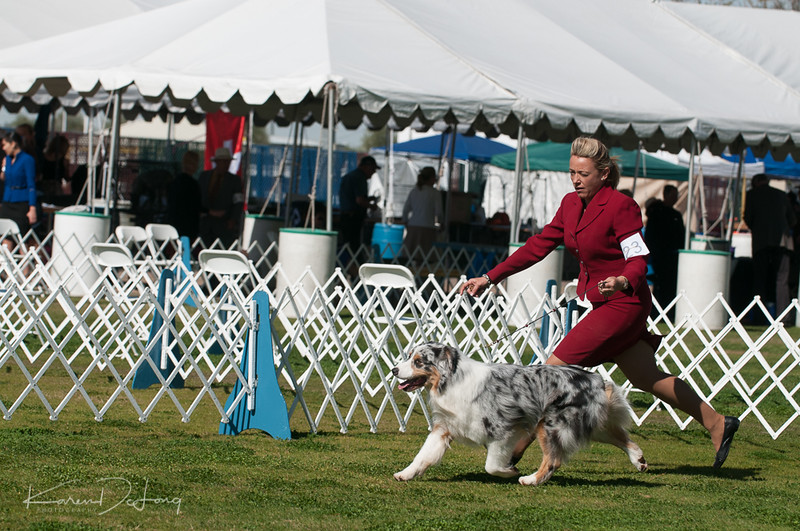 20170205_Australian Shepherds_Lost Dutchman Kennel Club-181.jpg