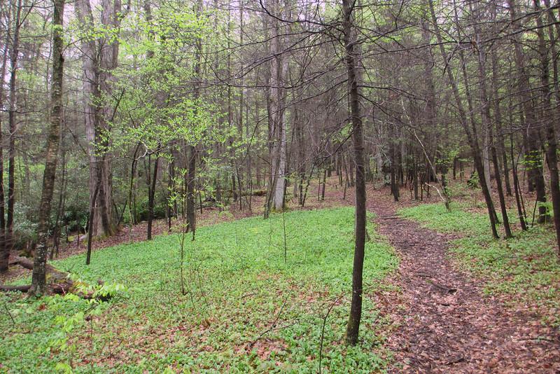 Cold Branch Falls Trail