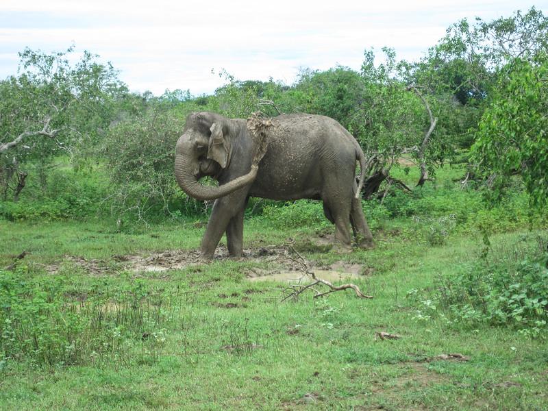 Sri_Lanka17-9666.jpg