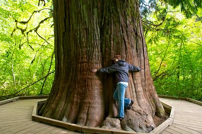 Mt. Rainier Grove of the Patriarchs