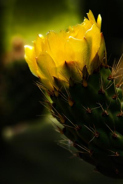 Cactus 1, Luther Burbank Home and Garden, Santa Rosa, California, 2010