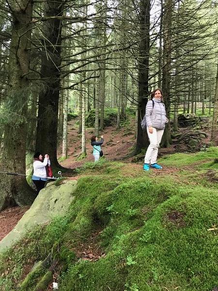 Bergen forest.jpg