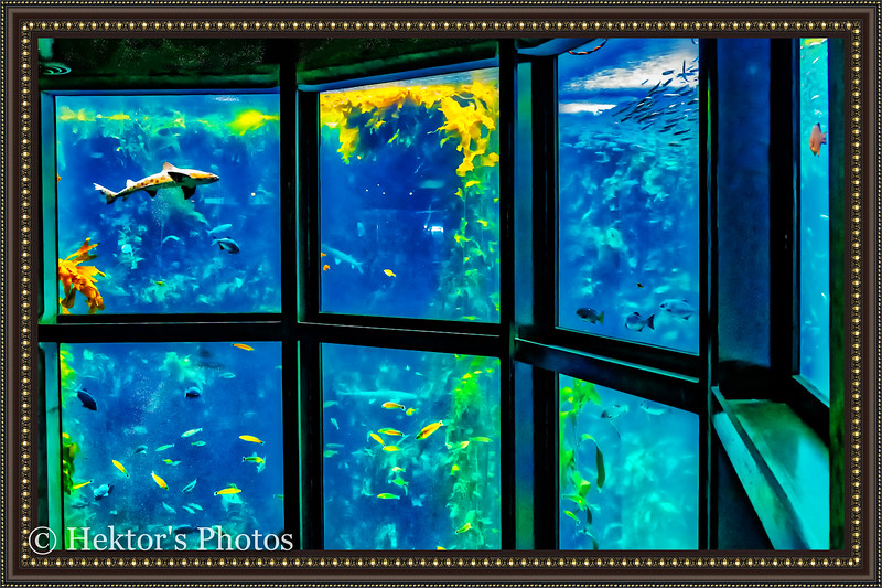 acquarium-19.jpg