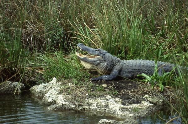 Florida Everglades NP