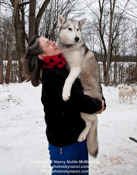 Braeburn Siberians Dog Sledding
