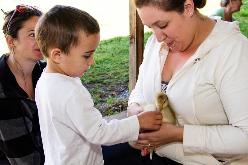04-19 Preschool Animal Day-41.jpg