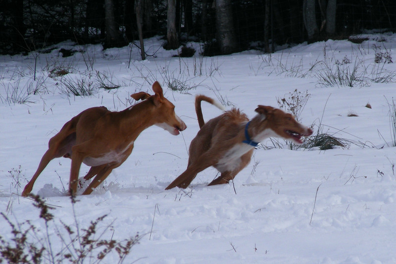 """""""SNOW BANKING""""<br /> <br /> Someday This Magic Moment & daVinci's Wickkid Sorcerer<br /> <br /> Photo by Colleen Gallagher"""