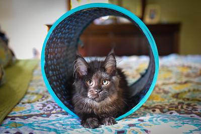 May I introduce to you, Xena, The Princess Warrior Kitty