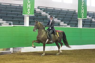 177 - English Pleasure Saddle Seat Open Stake
