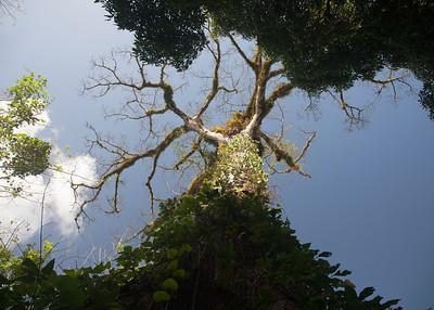 Punta Gorda Area (Cotton Tree Lodge) - Travel