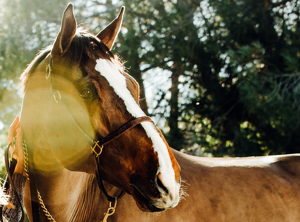 Equestrian & Equestrienne Photography