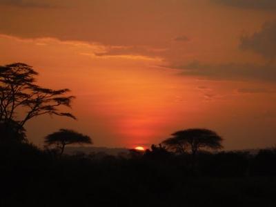 1494239969African-Safari-11.jpg