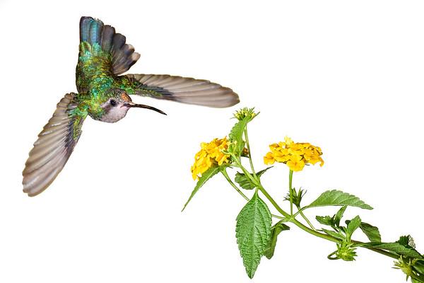 Birds, Flowers, Nature