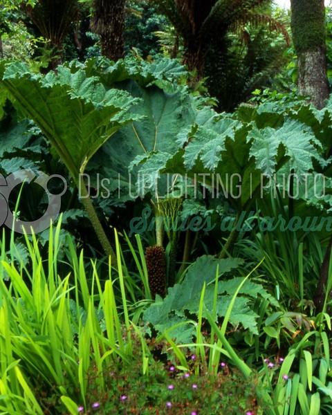 Jungle Flora_batch_batch.jpg