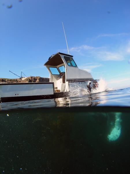 Getting Wet, Anacapa Island, CA