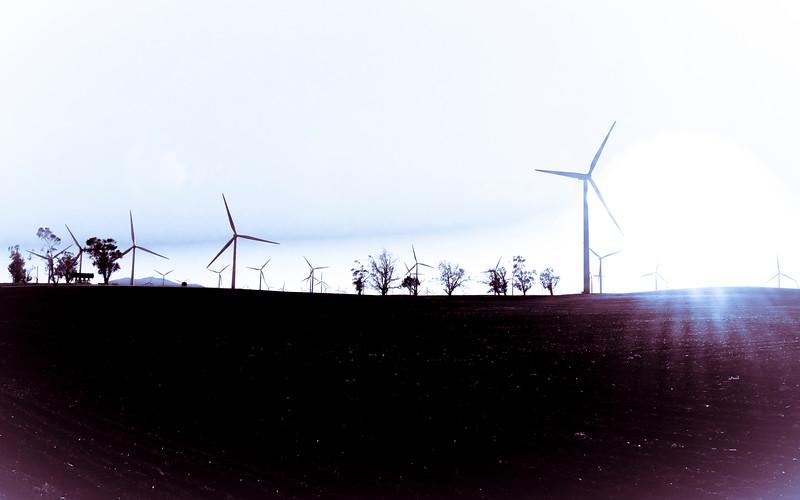 Windmills 3-0413.jpg