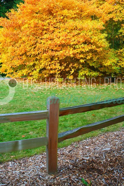 Bright Orange Leaves_batch_batch.jpg