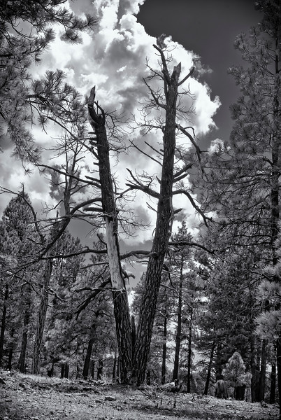 Kaibab Nation Forest
