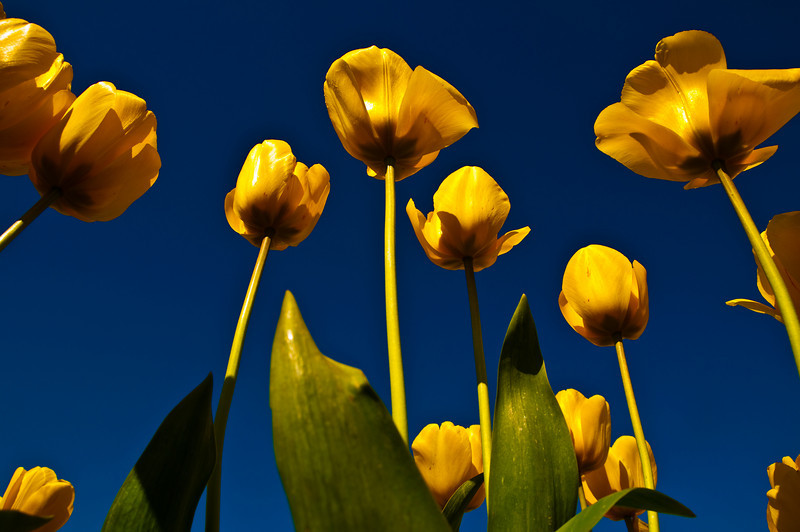 TulipFestival-162.jpg