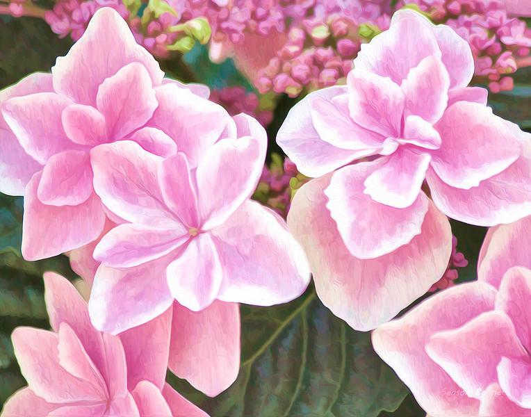 Pinks_0439.jpg