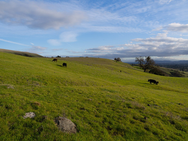 Harvey Bear Ranch January dayhike