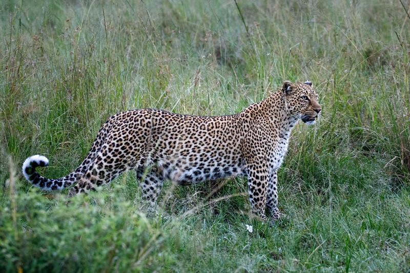 Kenya_PSokol_0619-2295.jpg