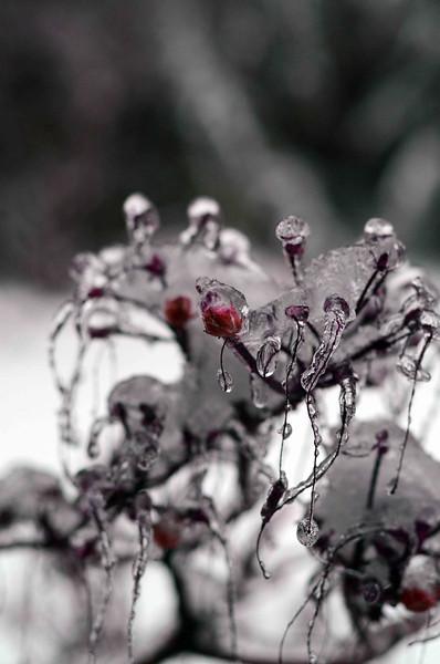 Snow January 2012