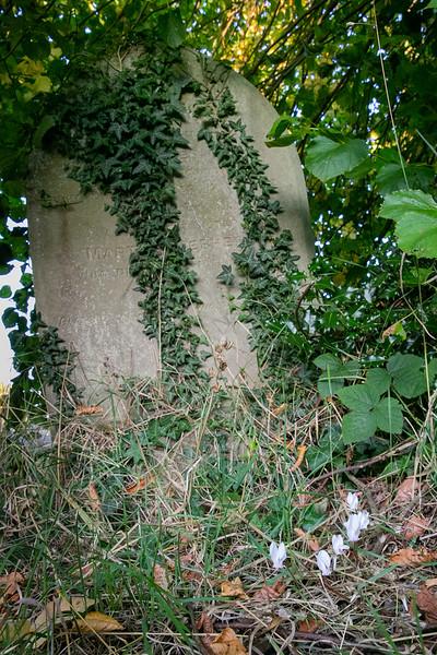 20190918- Newtown Road Cemetery Flora Sept 2019 - 105.jpg