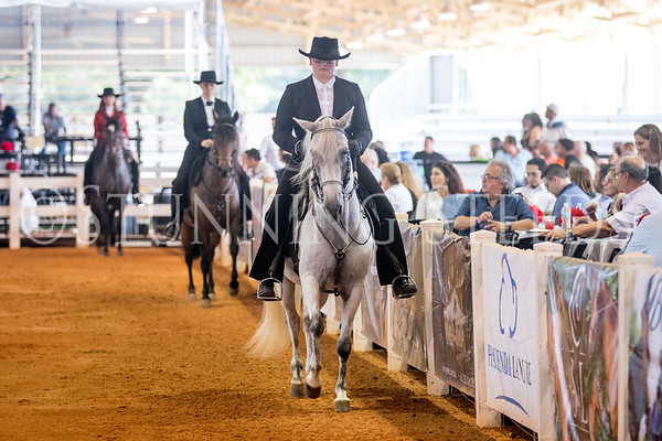 257-Fino Amateur Mares 7 Years & Older