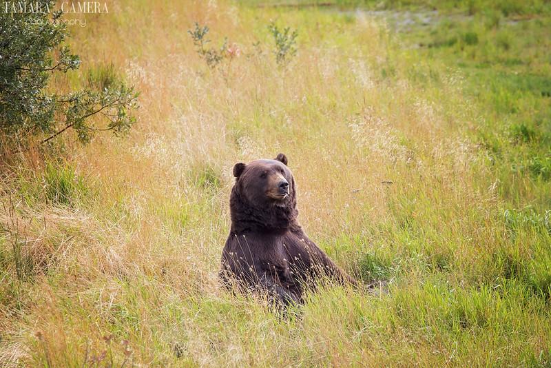 Bear-8-2.jpg