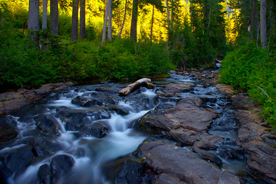 Nisqually Creek