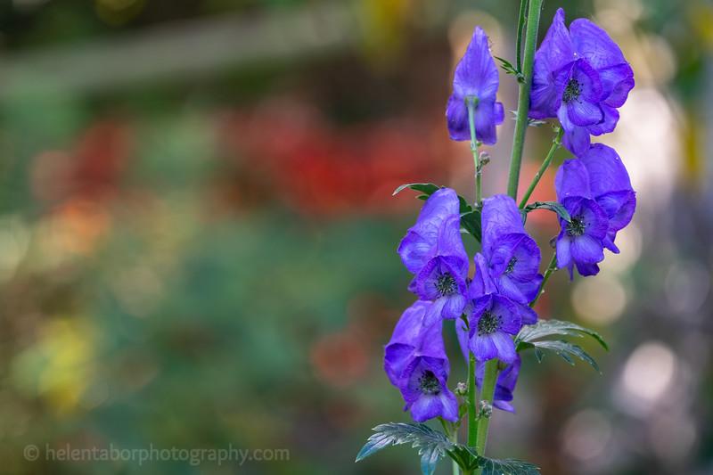 Himalayan Garden Oct 18-21.jpg