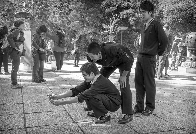 Daibutsu, Kotoku in, Kamakura