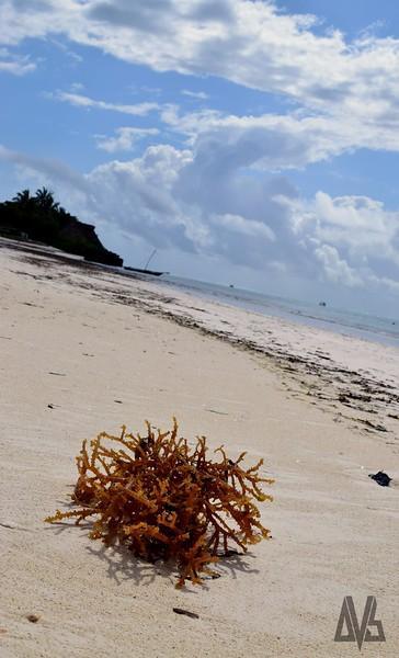 Images of Zanzibar 2014