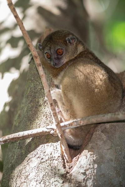 Madagascar_2013_FH0T2517.jpg