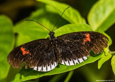 Butterflies & Moths 2018 - Set 9