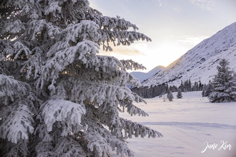 2019-02-09 Alaska Wild Guides-6106268-Juno Kim.jpg