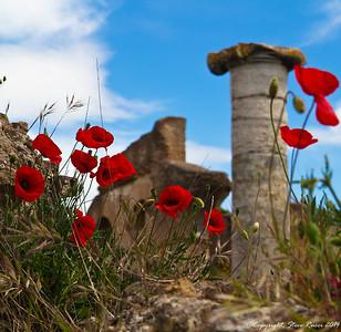 Wildflowers Around the Mediterranean