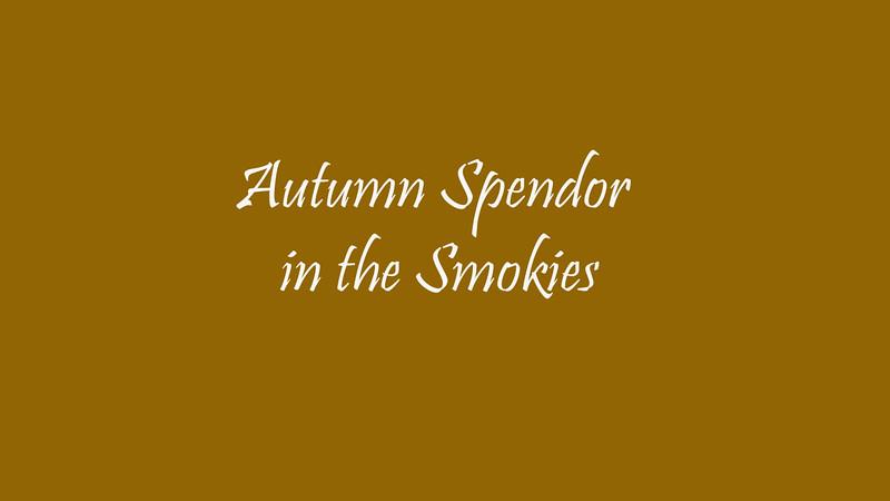 autumn splendor in smokies wide.mp4