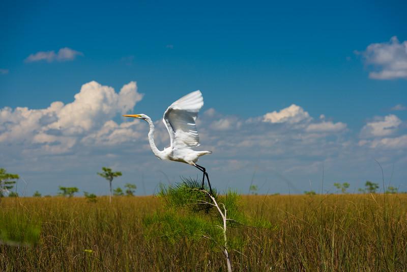 Everglades (23 of 37).jpg