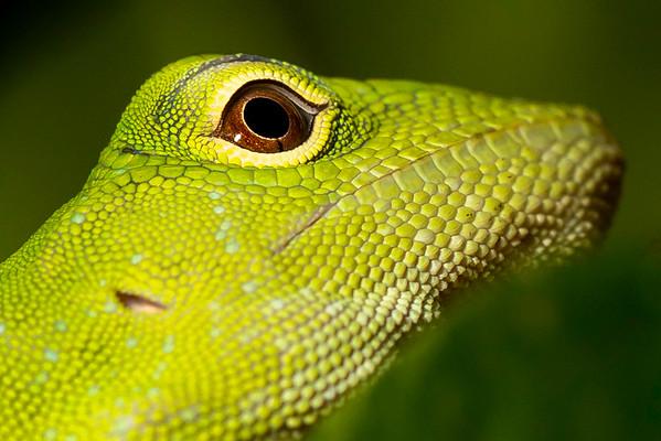 Biol 499 Costa Rica 2019-20