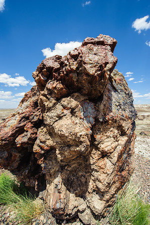 20090621 Petrified Forest