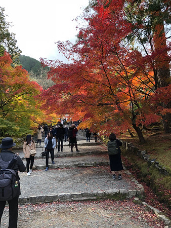 Chasing Leaves in Kyoto