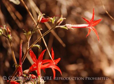 Mesa Verde Flowers and Plants