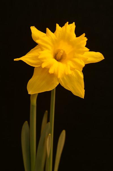 Yel Flower07.jpg