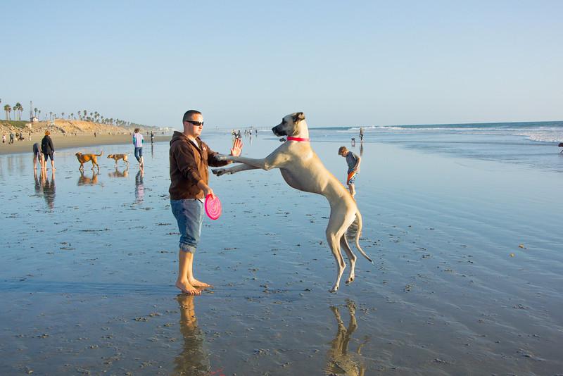 dogs_beach-45.jpg