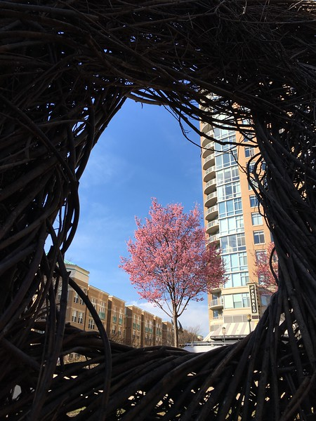20160309 030 early spring at Reston Town Center.JPG