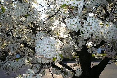 Cantigny Spring 2010